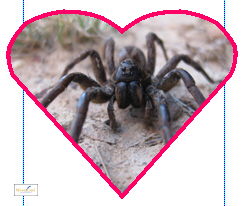 I heart spiders!