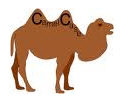Camel case - picture of camel