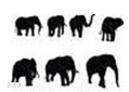 A collection of elephants